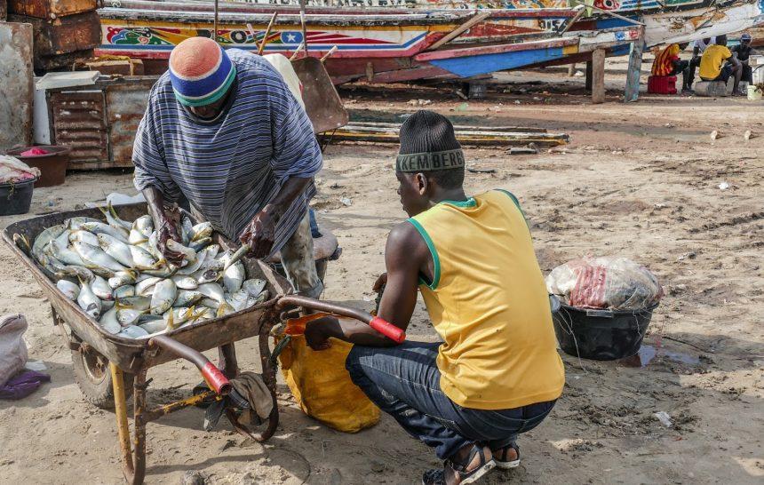 tanji fish market gambia